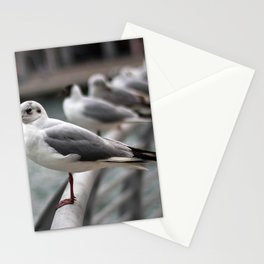 Seagull bird 4 Stationery Cards