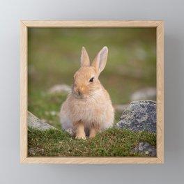 Mopsy the rabbit Framed Mini Art Print