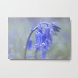 Misty English Bluebells Metal Print