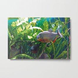 Piranhas #2 Metal Print