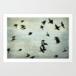 Birds Let's fly Art Print