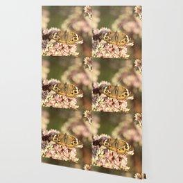 Buckeye Butterfly Macro Wallpaper