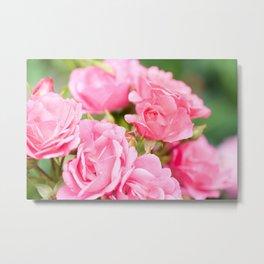 Beautiful pink roses bunch Metal Print