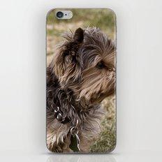 Patient Pup iPhone & iPod Skin