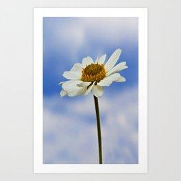 Daisy Daisy II Art Print