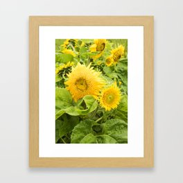 Teddy Bear Sunflowers Framed Art Print