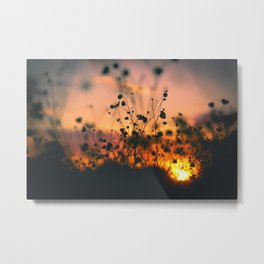 Poppy flowers shadows over sunset Metal Print