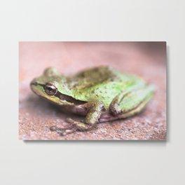 Sierran tree frog Metal Print