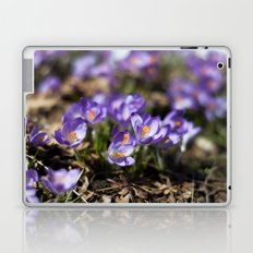 Purple Crocuses Laptop & iPad Skin