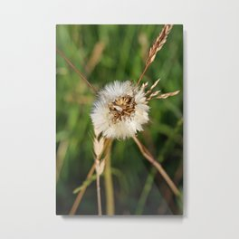 beauty faded thistle Metal Print