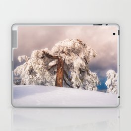 Frost Covered Pine Laptop & iPad Skin