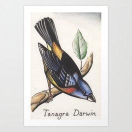 Darwin Finch Watercolor Art Print