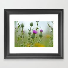 Thistle 5158 Framed Art Print