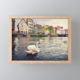 magnificent swans Framed Mini Art Print