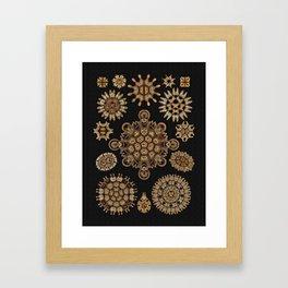 Golden Tinted Melethallia on Black Framed Art Print
