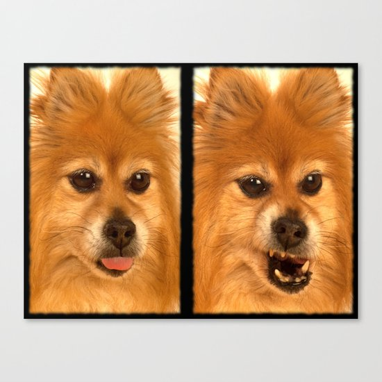 Pomeranian dog (slightly distorted like her personality) lol Canvas Print