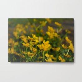 Marsh Marigold Metal Print