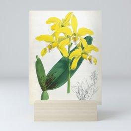 Laelia Xanthina Vintage Yellow Lindenia Orchid Mini Art Print
