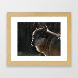 Gray Wolf Portrait Framed Art Print