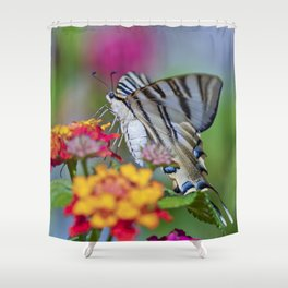 Southern swallowtail or zebra butterfly Shower Curtain