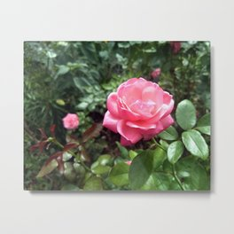 Pink Rose 001 Metal Print