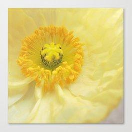 Icelandic Poppy Sweetness Canvas Print