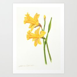 Early Daffodils Art Print