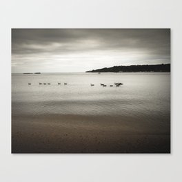 Ducks in the bay Canvas Print