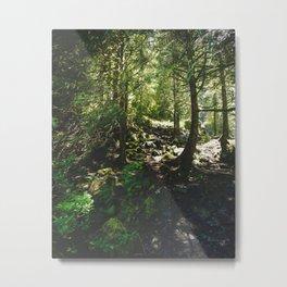 Oregon Forest Metal Print