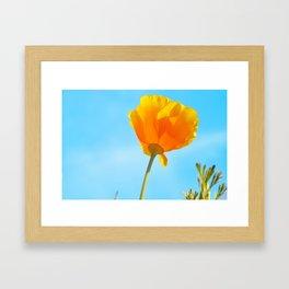 California Golden Poppy Framed Art Print