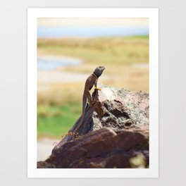 Mojave Callared Lizard Art Print
