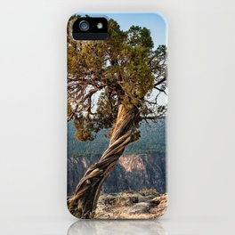 Juniper of the Gunnison iPhone Case