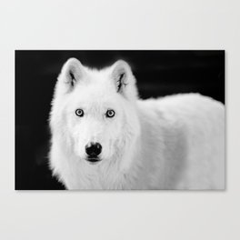 save the wolf Canvas Print