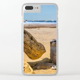 Funny meercats sitting in shadow in sunny day, cute animals Clear iPhone Case