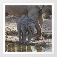 baby elephant Art Prints featuring Elephant Baby by MehrFarbeimLeben