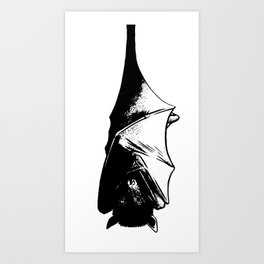 Drawing of Hanging Flying Fox Bat Art Print