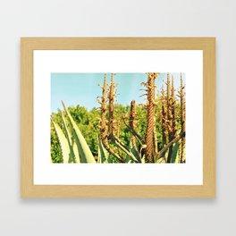 South Africa Framed Art Print