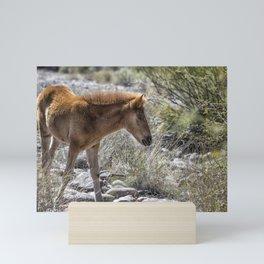Salt River Wild Foal Mini Art Print