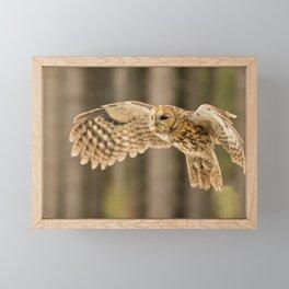 Tawny Owl in Flight Framed Mini Art Print