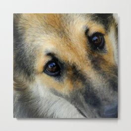 Up close & dog Metal Print