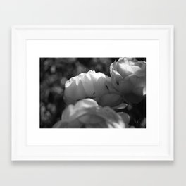 Ant on a Rose, Black and White Framed Art Print