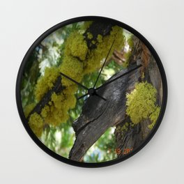 road trip, tree, moss Wall Clock