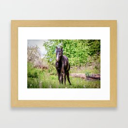 Dark bay horse Framed Art Print