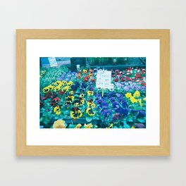 Pansies Framed Art Print