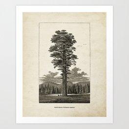 Giant Sequoia Tree Illustration Art Print
