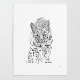 On the Prowl :: A Young Bobcat Poster
