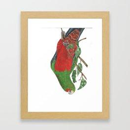 Curious King Parrot Framed Art Print