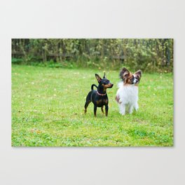 Outdoor portrait of a miniature pinscher and papillon purebreed dogs on the grass Canvas Print
