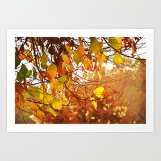 Fires of Fall Art Print
