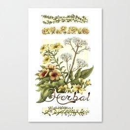 Herbal Canvas Print